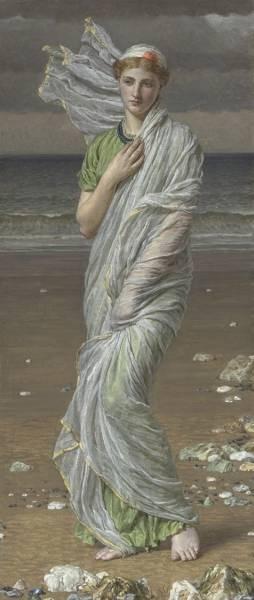 Moore Seashells